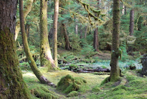East Beach Trail, Haida Gwaii, Canada